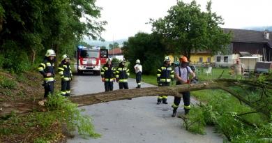 Baum blockiert Gemeindestraße