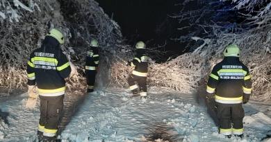 Schneebruch sorgte für zahlreiche umgestürzte Bäume